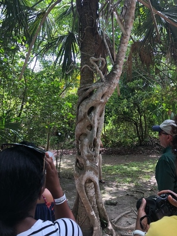 Costa Maya Chacchoben Mayan Ruins Excursion great Local tour guides!!