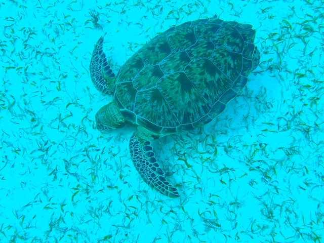Costa Maya Reef Snorkeling Excursion and Beach Break amazing