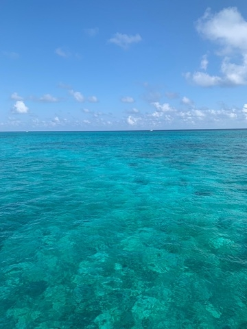 Grand Cayman Captains Choice Snorkel and Stingray City Excursion Fell in love with Cayman