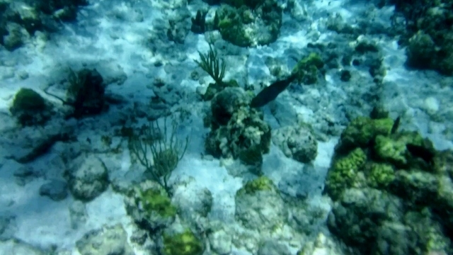 Grand Cayman Coral Reef Snorkel and Stingray City Combo Excursion Muy entretenido!!!