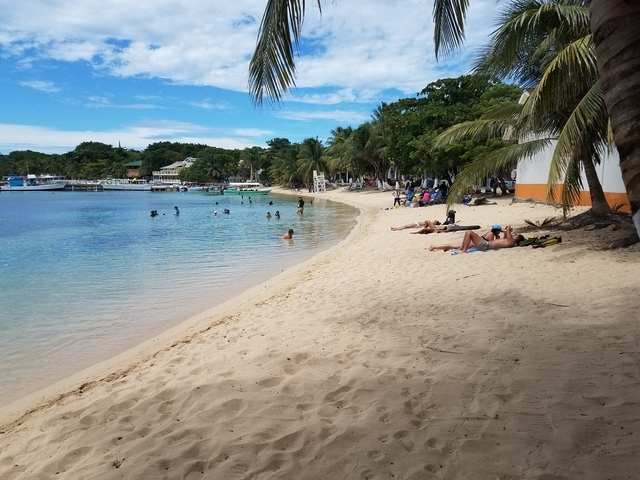 Roatan Hop On Hop Off Bus Highlights and Beach Break Excursion This tour was great!