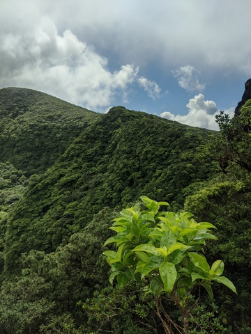 St. Kitts Mount Liamuiga Volcano Hiking Excursion Great hike!