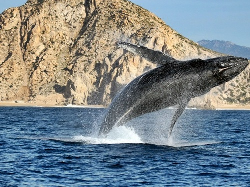 Los Cabos private charter Excursion Reviews