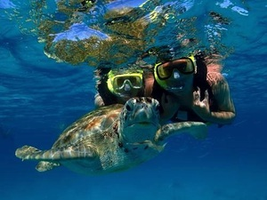 Barbados Best Eco Highlights, Turtle Encounter Excursion with Lunch