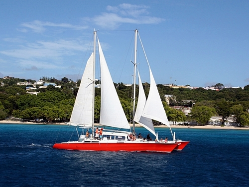 Barbados West Indies swim with sea turtles Tour Booking