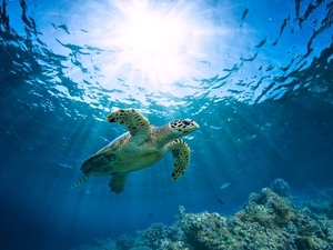 Belize 2 Site Snorkel with Sea Turtles and Caye Caulker Beach Break Excursion