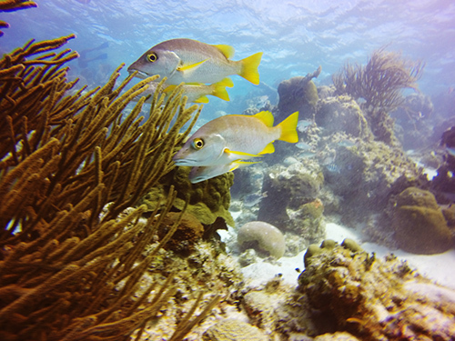 Belize Belize City Fun Snorkeling Trip Reservations