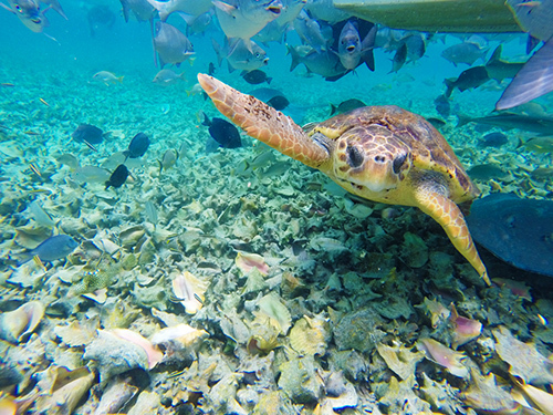 Belize Belize City Swimming Snorkeling Tour Booking