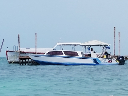 Belize Shark Ray Alley Snorkeling Shore Excursion Tickets