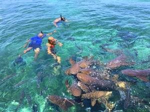 Belize Private Group for Hol Chan, Shark Ray Alley Snorkel & Caye Caulker Beach Break Excursion