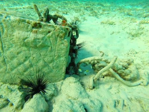 Grand Cayman scuba Cruise Excursion Cost