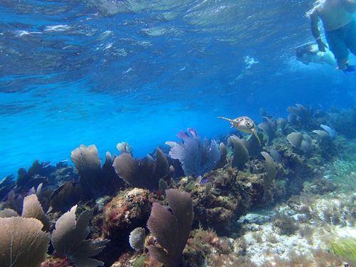 Belize Goff S Caye Island Getaway And Snorkel Cruise