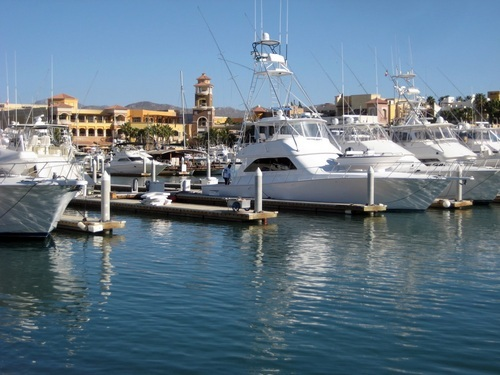 Cabo San Lucas whale watching Reservations