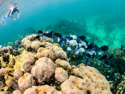 Bonaire Marine Life Snorkel Excursion Booking