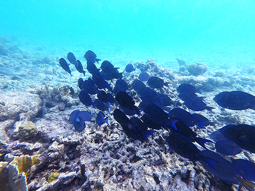 Bonaire Leeward Antilles Friends Snorkel Excursion Cost