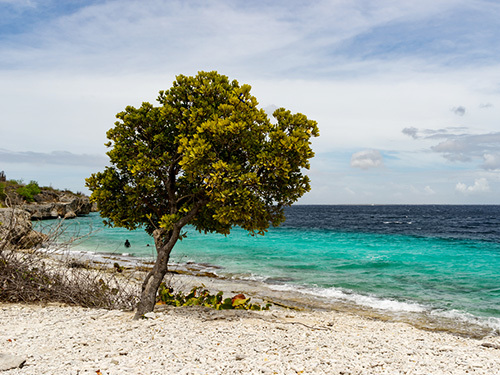 Bonaire Leeward Antilles Friends Beach Break Shore Excursion Booking