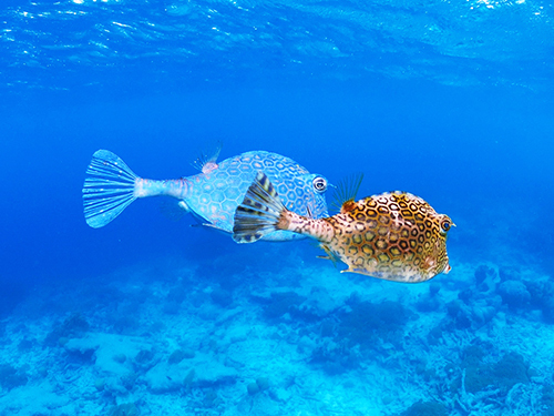 Bonaire Beach Break Snorkel Tour Booking