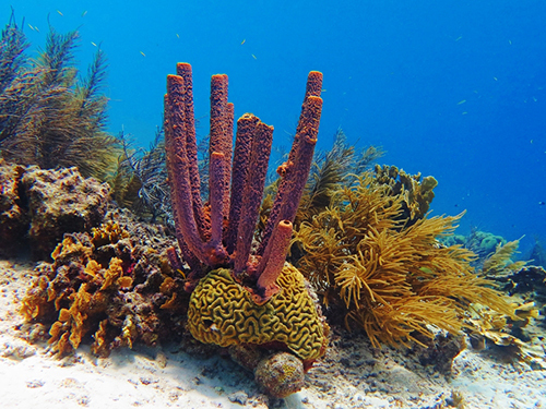 Bonaire Snacks Snorkel Excursion Tickets
