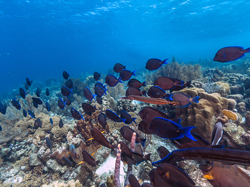 Bonaire Leeward Antilles Marine Life Snorkel Excursion Booking