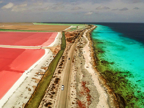 Bonaire Salt Flats Sightseeing Shore Excursion Tickets