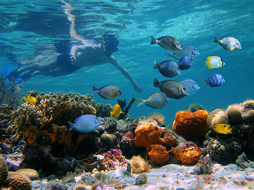 Bonaire Leeward Antilles Reefs Shore Excursion Reviews