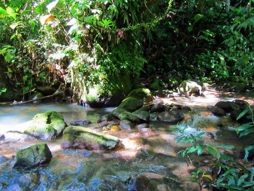 Dominica hiking Trip Reservations