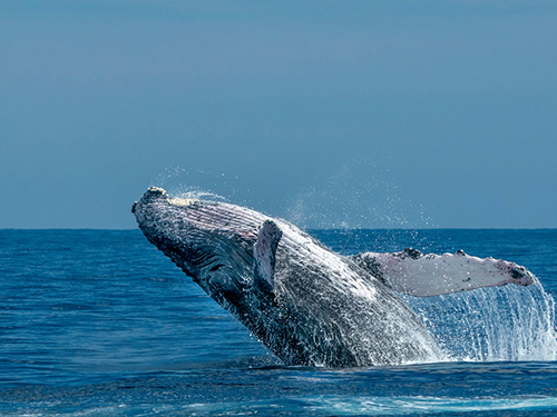Cabo San Lucas Sightseeing Whale Watching Tour Reservations