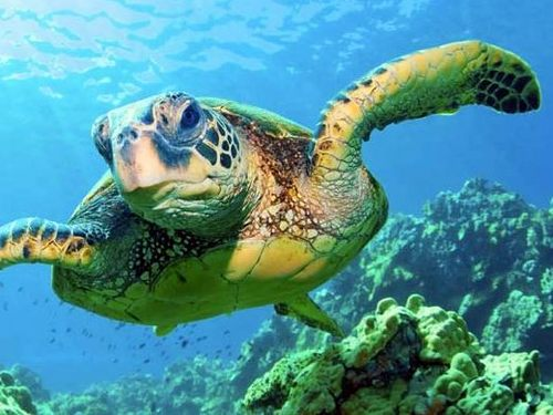 Lahaina reef viewer Excursion Reservations
