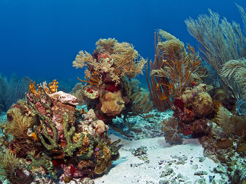 Roatan snorkeling Tour Reservations