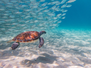 Costa Maya Reef Snorkeling Excursion and Beach Break