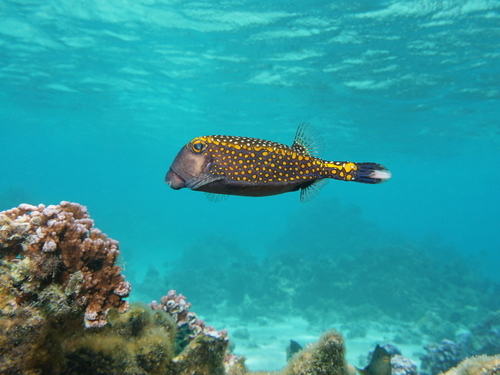 Costa Maya Snorkeling by Boat Cruise Excursion Booking