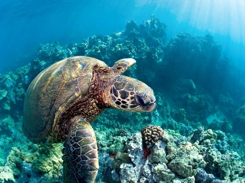 Belize  Belize City coral reefs Trip Reviews