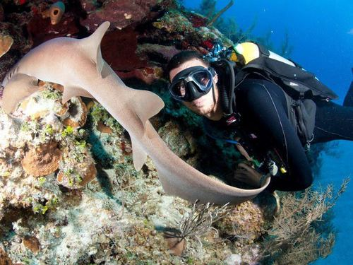 Grand Cayman scuba diving Tour Prices