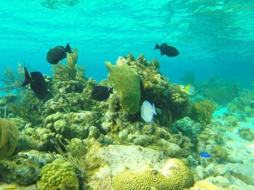 Grand Cayman  Grand Cayman (George Town) Beginner SCUBA Excursion Reviews