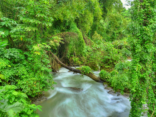 Falmouth Jamaica rain forest Tubing Cruise Excursion Booking