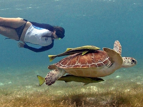 Belize  Belize City snorkeling Tour Cost