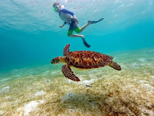 Belize  Belize City coral reefs Excursion Prices