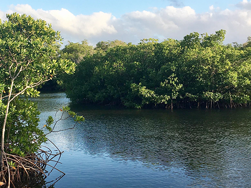 Grand Cayman Snorkeling Private Trip Reservations