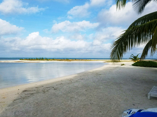 Grand Cayman Cayman Islands Stingray City Cruise Excursion Reviews