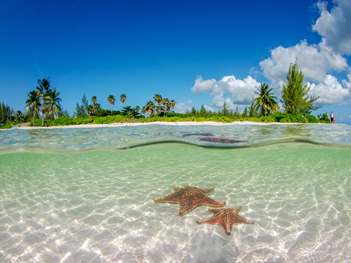 Grand Cayman Cayman Islands Custom Stops Private Tour Tickets