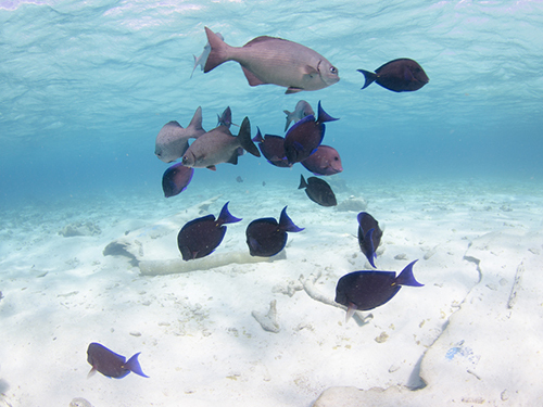 Grand Cayman Starfish Point Private Trip Booking