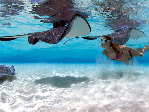 Grand Cayman Custom Stops Private Trip Prices