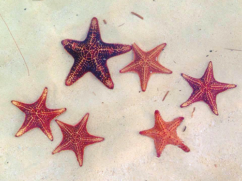 Grand Cayman Cayman Islands Custom Stops Private Trip Prices