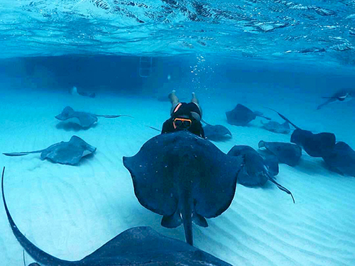 Grand Cayman Rum Point Private Excursion Cost