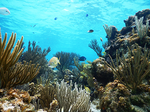 Grand Cayman Cayman Islands Custom Stops Cruise Excursion Reviews