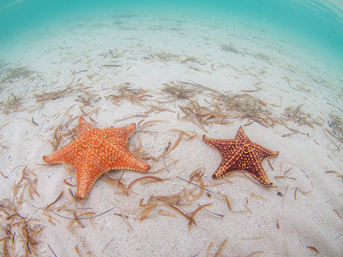 Grand Cayman Beach Shore Excursion Booking