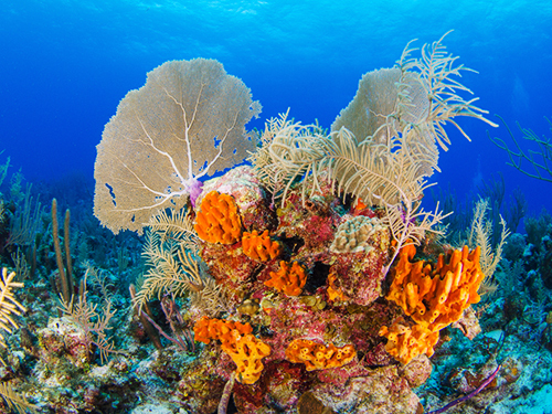 Grand Cayman Beach Private Excursion Cost