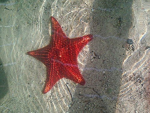 Grand Cayman Coral Gardens Private Excursion Tickets