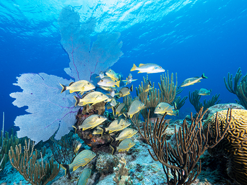 Grand Cayman Coral Gardens Shore Excursion Reservations