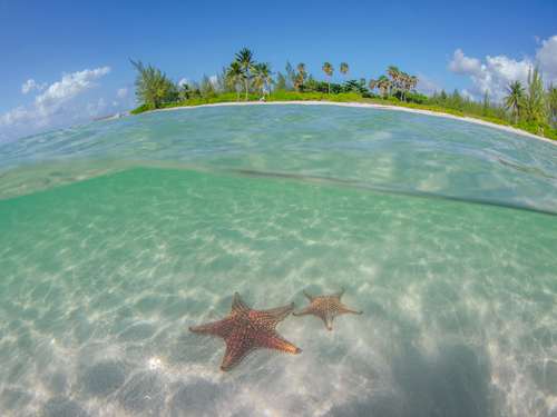 Grand Cayman stingray city Shore Excursion Prices